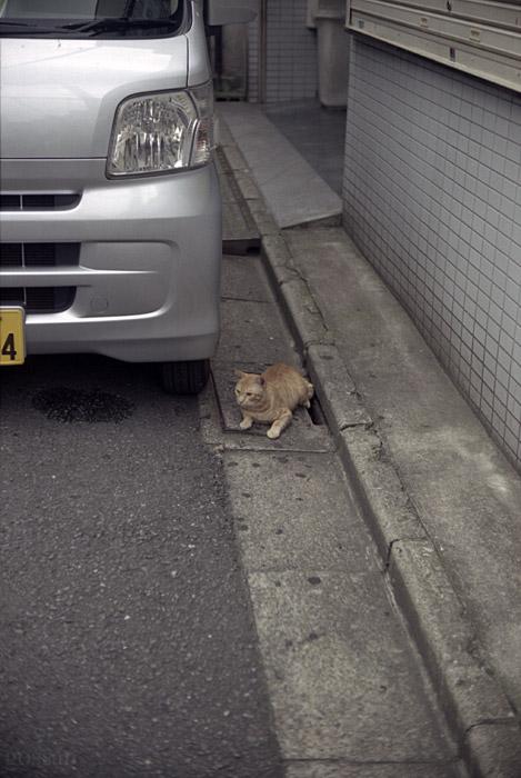 100801_06_cat