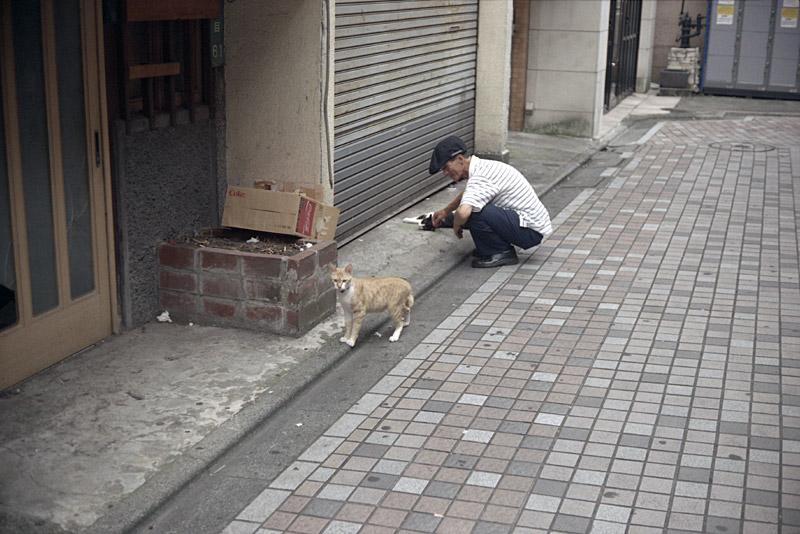 100801_07_cat